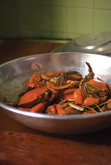 Hsaba_crabs