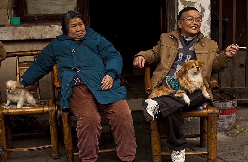 Chengdu_China_dogs