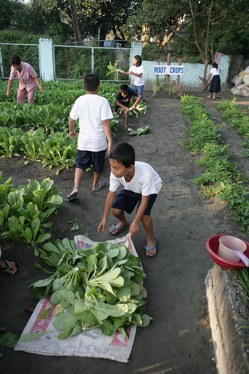 School vegetable gardens - 355n5555 355n5581