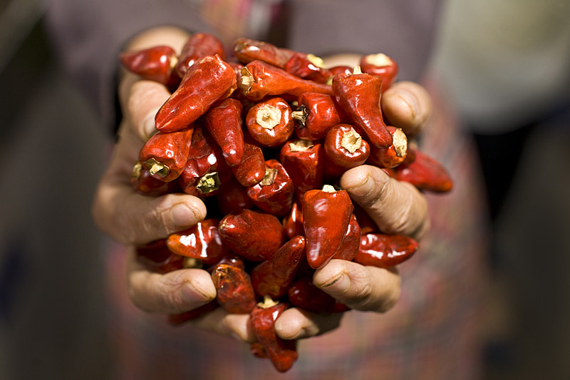 Sichuan chili holding