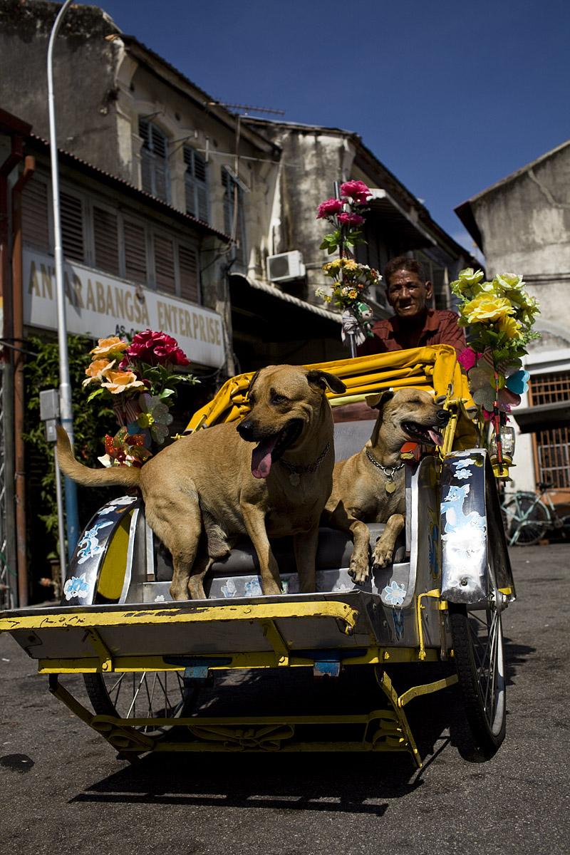 David_hagerman_george_town_dogs