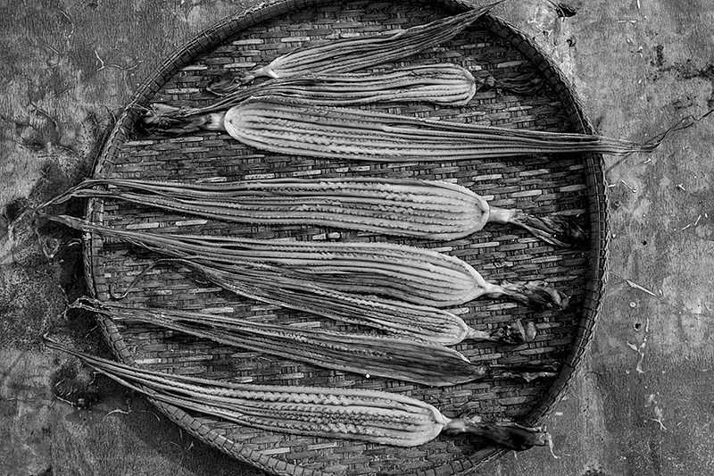 David-hagerman-squid-kohsamui-2012.09