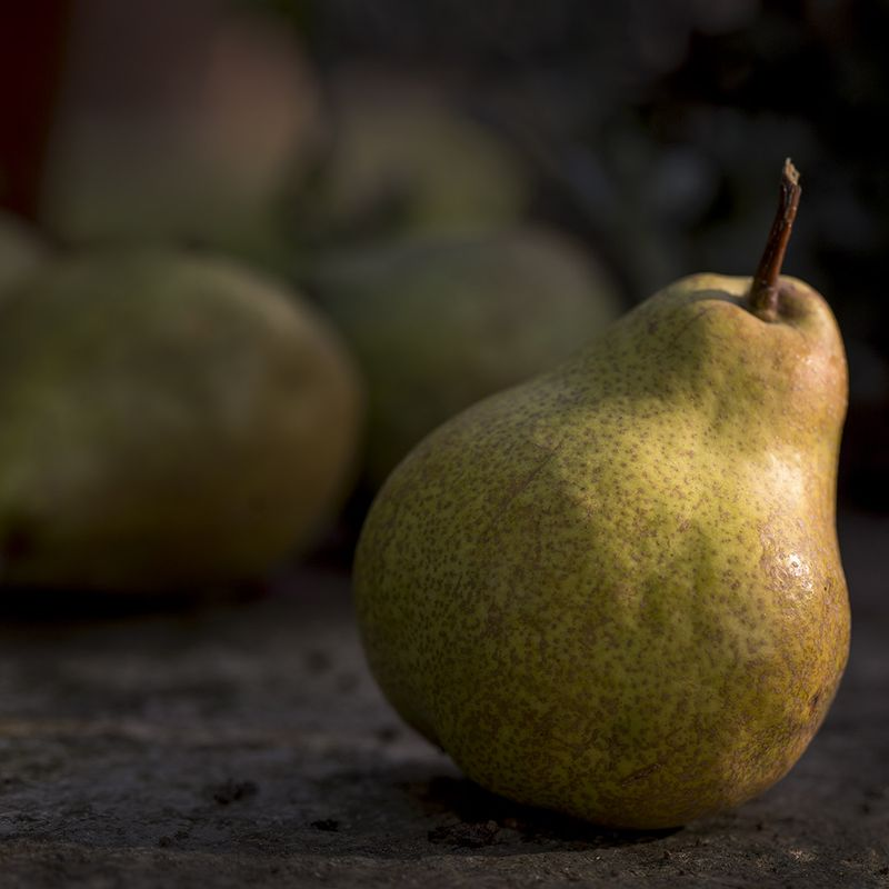 Pear_piedmont_hagerman_10.11.15