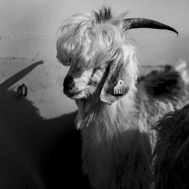 David-hagerman-bad-hair-day-goat-rize-turkey-august-2014
