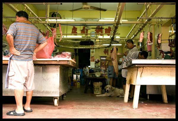 Penang_pork_shop_dog