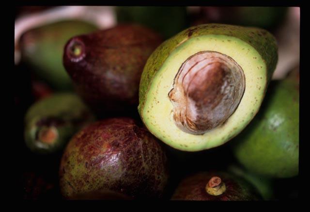 Avocadoes_close