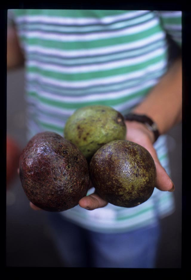 Avocadoes_in_hand