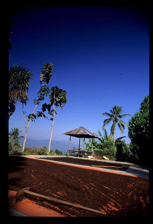 Bali_cloves_drying