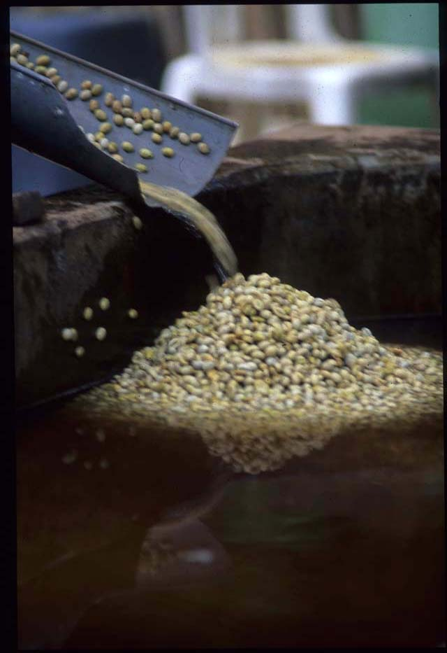Bali_coffee_into_the_water