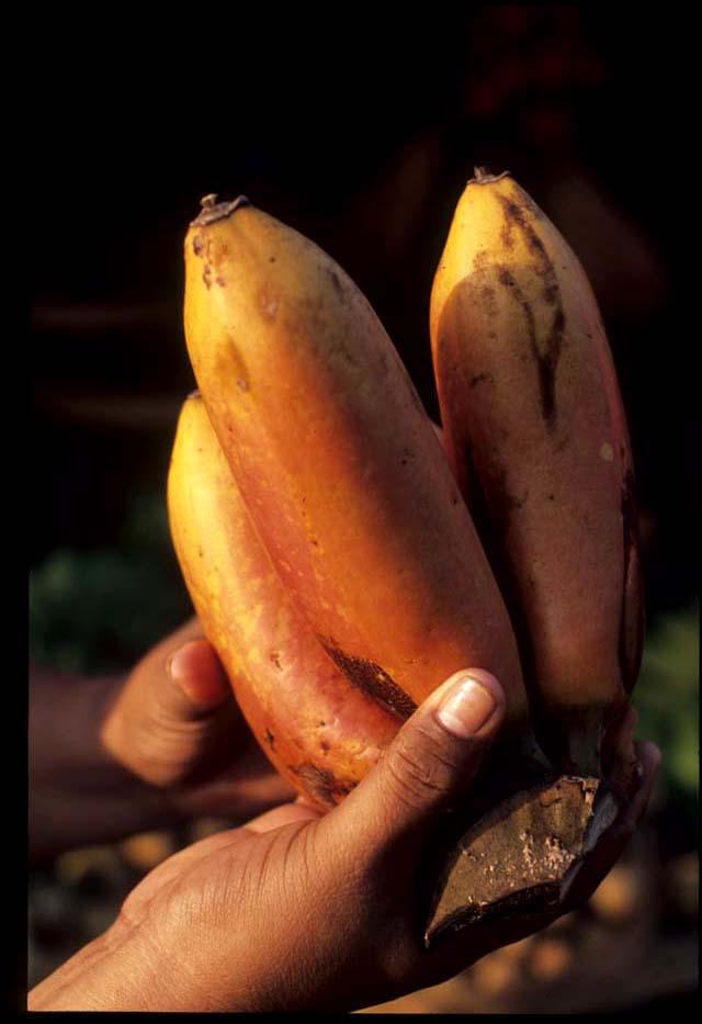 Banjar_market_bananas