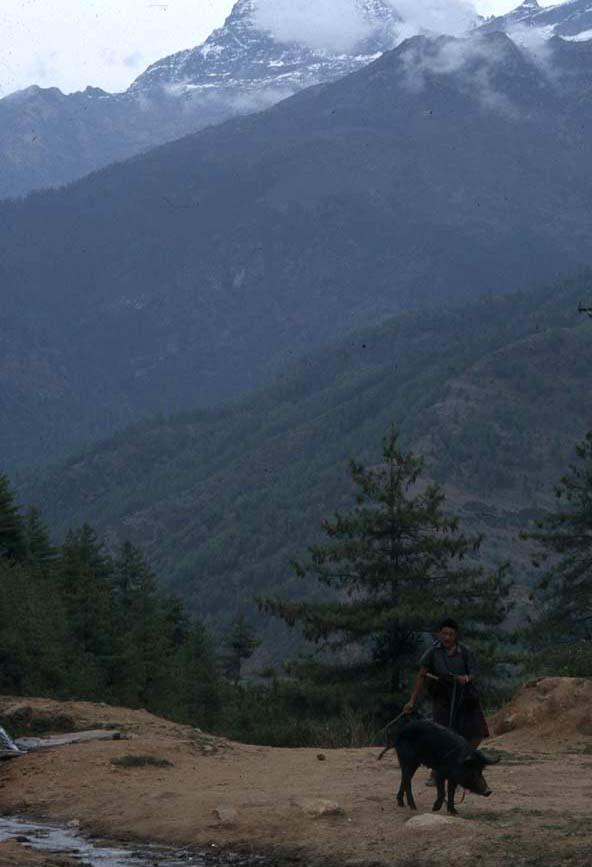 Bhutan_scenery_1