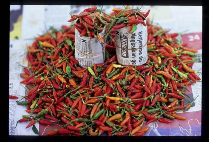 K_pilah_chilies