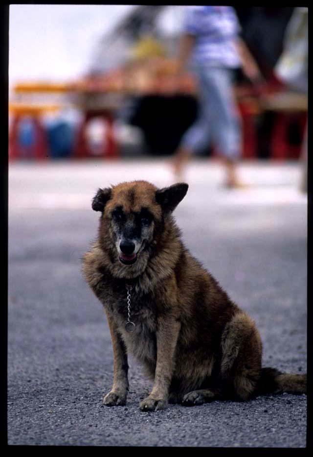 Kampar_doggy