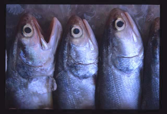 Kuala_selangor_surprised_fish