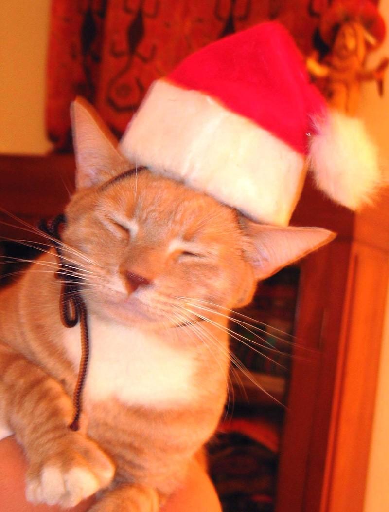 Santas_furry_elf_for_ea