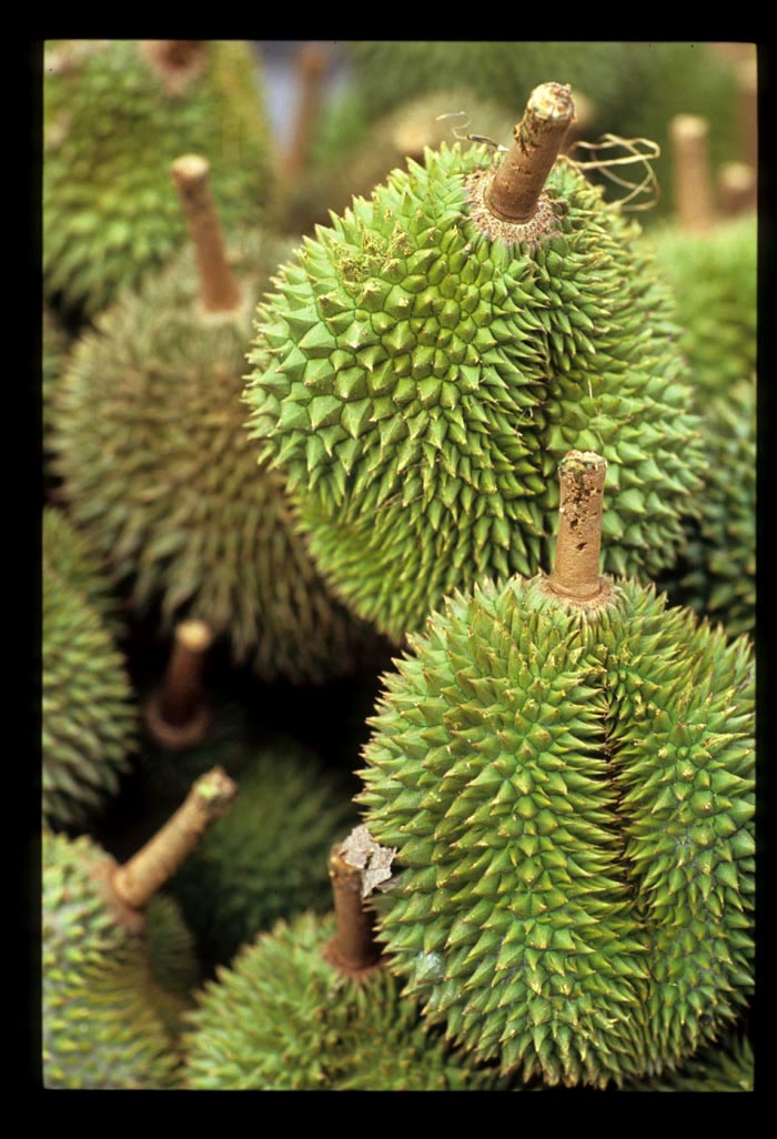 Ss2_durian