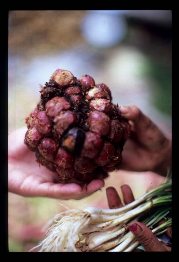 Sumatra_buah_handover