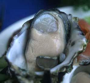 Sydney_doyles_oyster_close_1